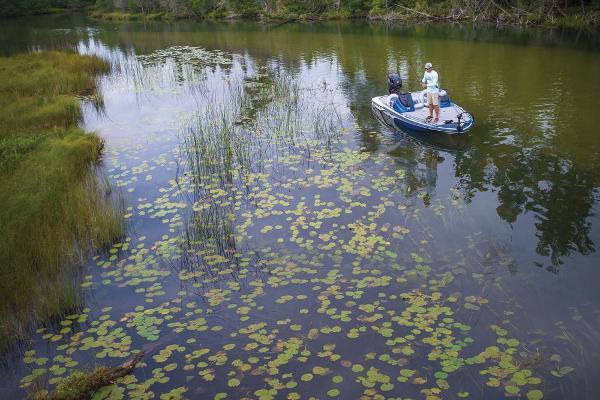 2020 Nitro boat for sale, model of the boat is Z17 & Image # 17 of 85