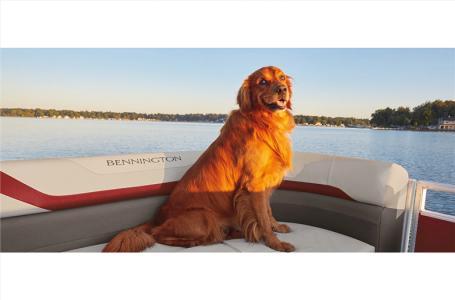 2021 Bennington boat for sale, model of the boat is 22 SLX & Image # 11 of 21